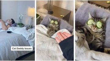 Gato relajándose con su dueño