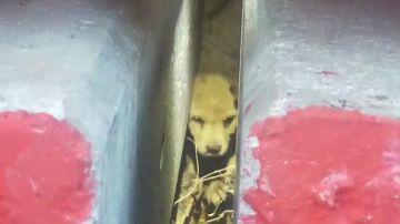 VÍDEO: Rescatan a un cachorro que se quedó atrapado debajo de postes de hormigón en Tailandia