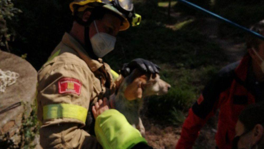 Uno de los perros rescatados en Sant Boi de Llobregat
