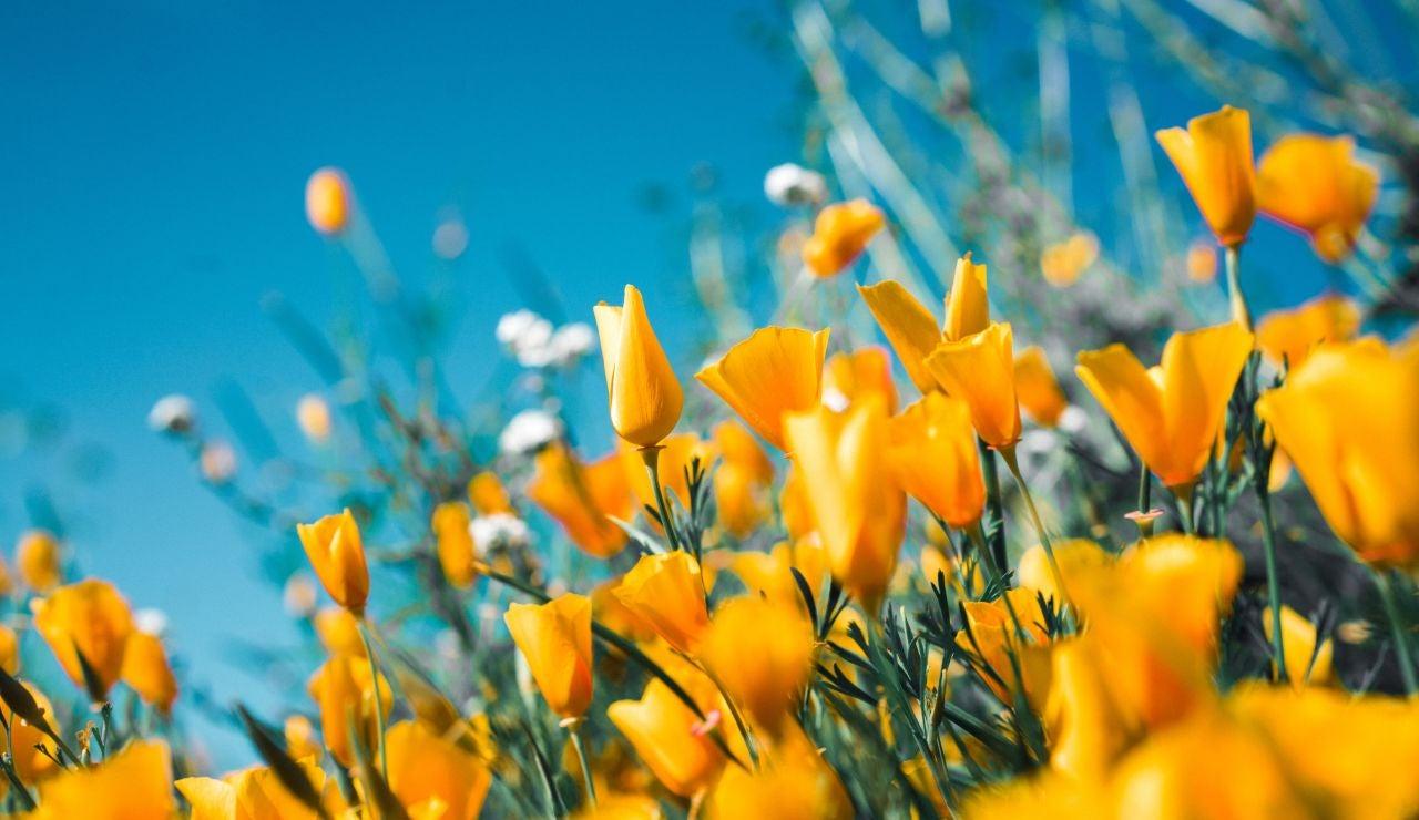 Frases sobre la primavera