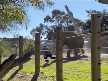 Un hombre y su hija huyendo del elefante