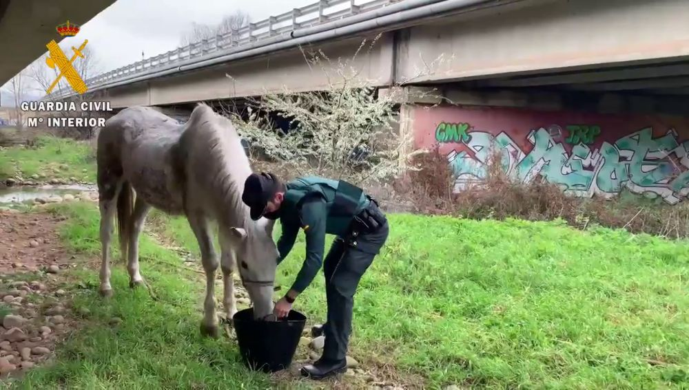 La Guardia Civil investiga a un hombre de la Rioja por abandono animal