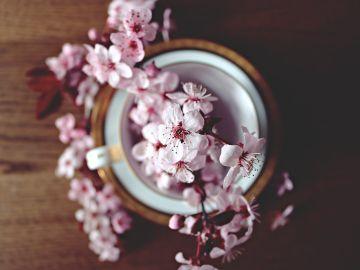 Psicología: La primavera la sangre altera