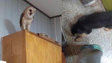 Lechuza asustada al ver a un perro