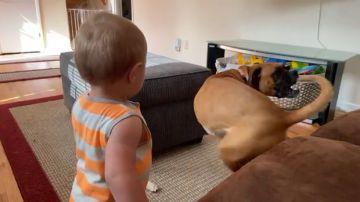 VÍDEO: Un bebé y su perra se divierten persiguiendo sus colas dando vueltas sobre si mismos