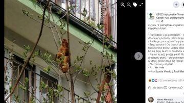 Facebook de la Sociedad Protectora de Animales de Cracovia