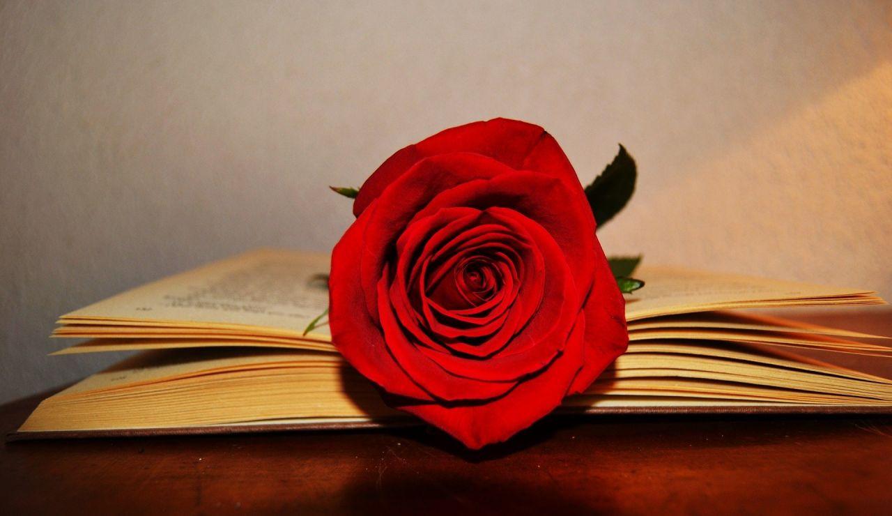 Cómo comprar rosas online para enviar en Sant Jordi 2021