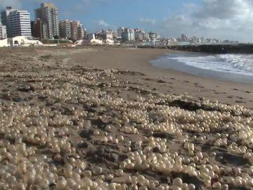 Perlas en el Mar de Plata