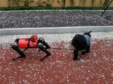 Crean un perro robot en China capaz de guiar y proteger a las personas
