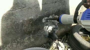 Rescatan a un perro atrapado en una pared que estaba condenado a morir