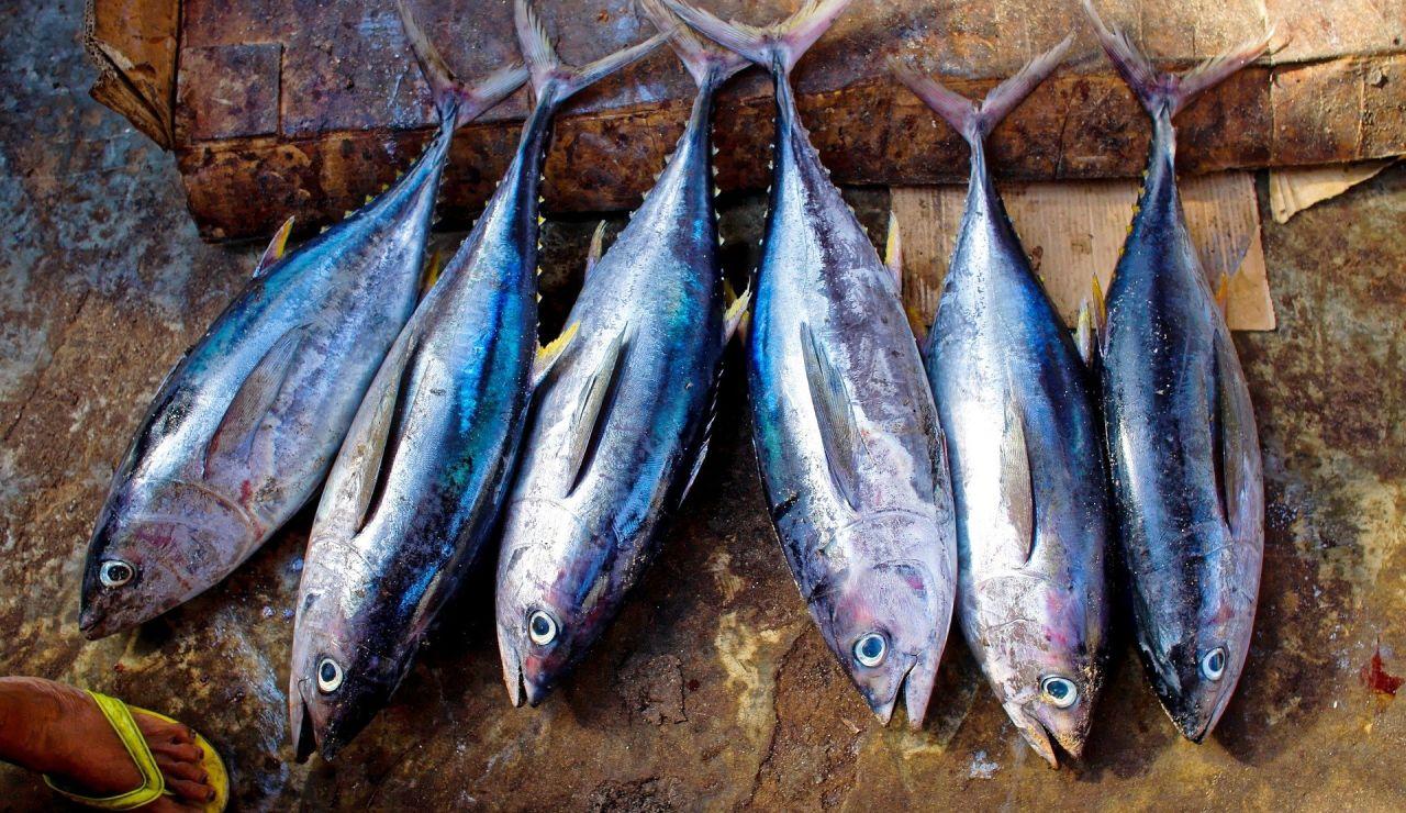 Cuántas calorías tiene el atún a la plancha, de lata y frito