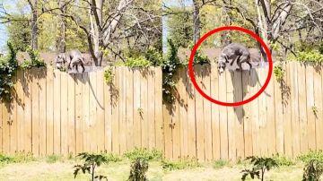 Un perro subido a una valla