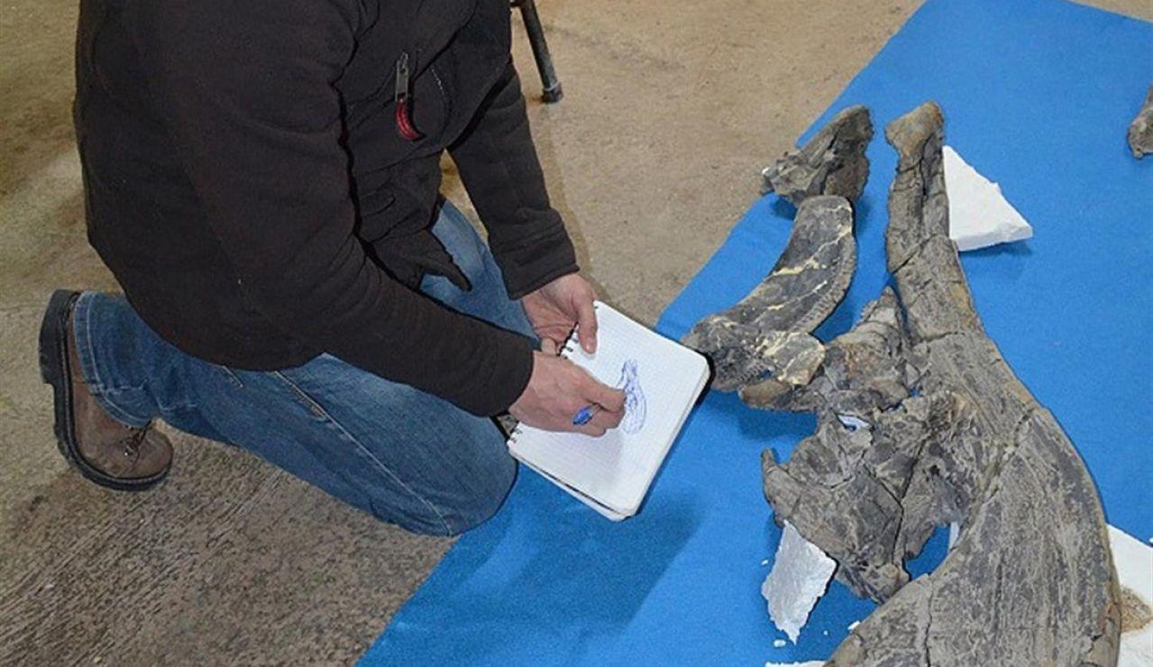 El panteologo Ángel Alejandro Ramírez, analizando un cráneo de dinosaurio, en Ciudad de México
