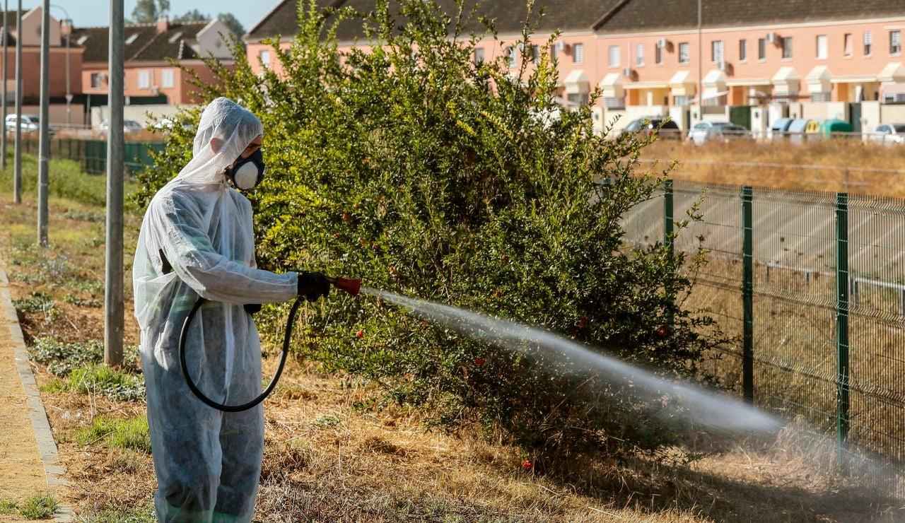 """Las autoridades sanitarias están detectando un aumento """"sin precedentes"""" del virus del NiloLas autoridades sanitarias están detectando un aumento """"sin precedentes"""" del virus del Nilo"""