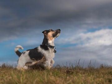 ¿Son peligrosas las tormentas para los perros?