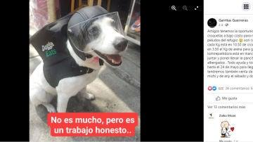 Facebook de @albergue.garritasguerreras
