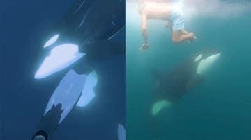 Nadando entre orcas