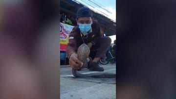 VÍDEO: Un encantador de serpientes muestra cómo atrapar una cobra con las manos desnudas