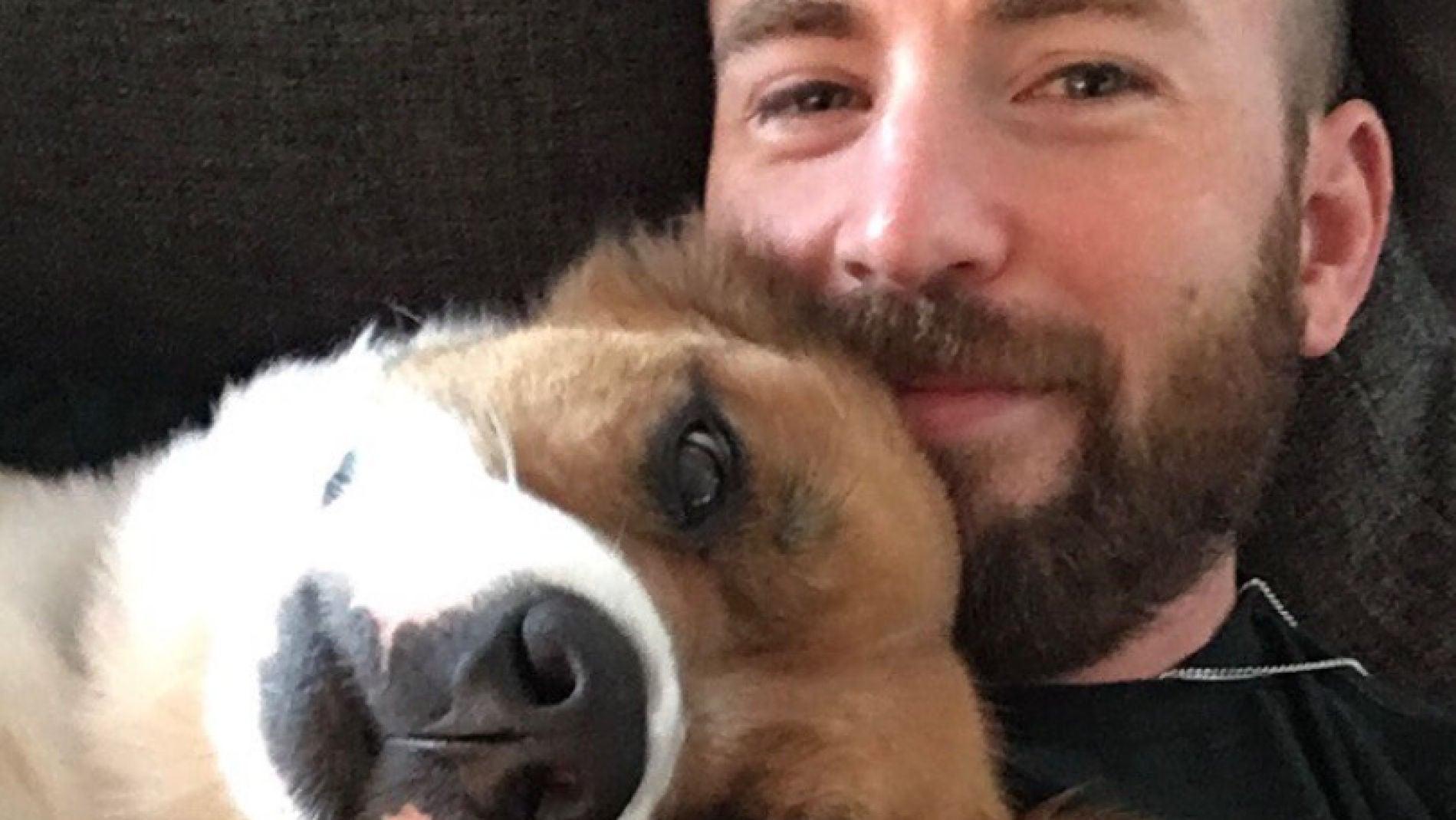 Chris Evans y su perro Dodger