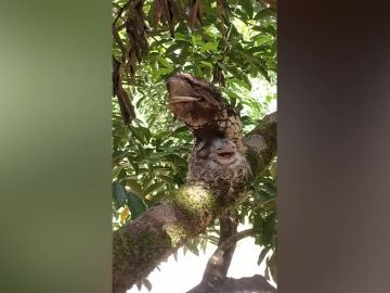 Pajaro escondido en un árbol