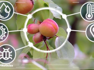 La tecnología, la mejor aliada de los agricultores para mejorar sus cultivos