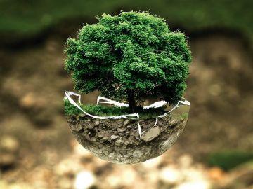 Día Mundial del Medio Ambiente 2021: ¿Por qué se celebra el 5 de junio?