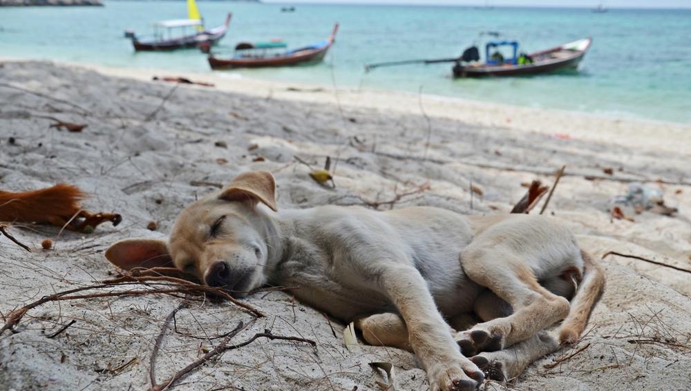 La siesta del perrete