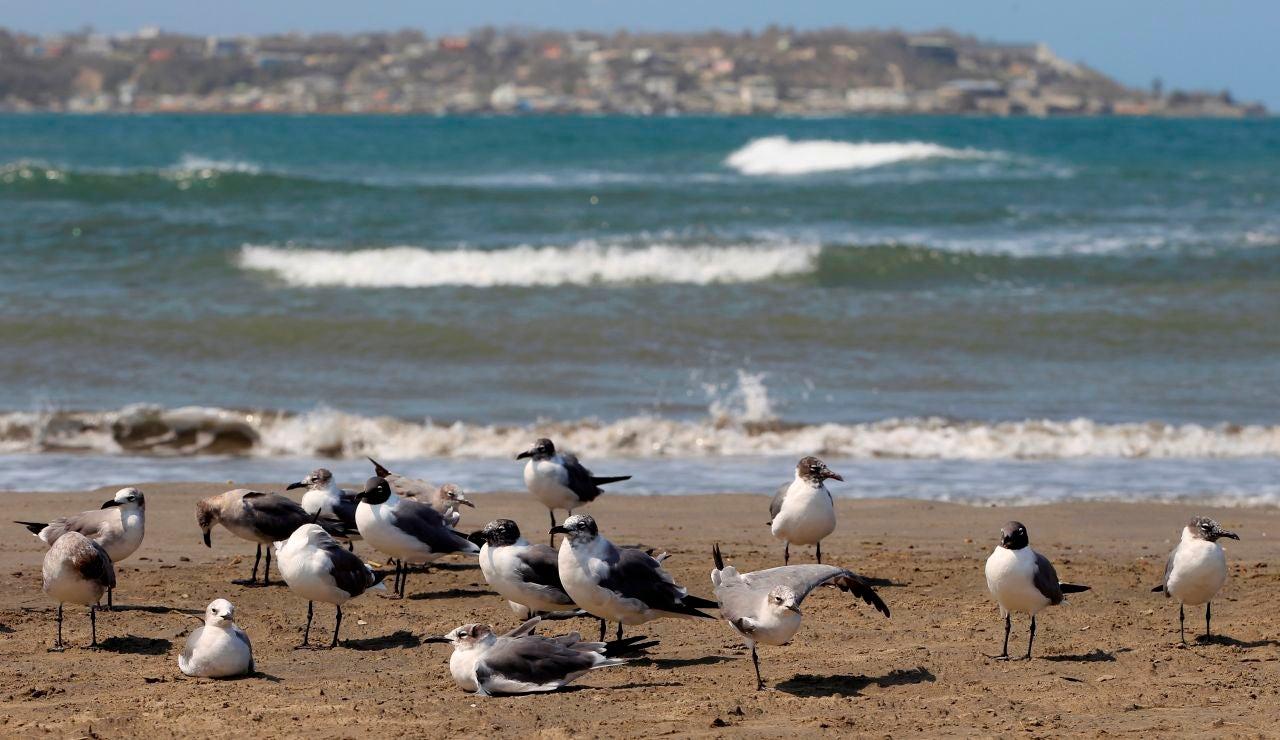 Un grupo de aves marinas es vista en una playa