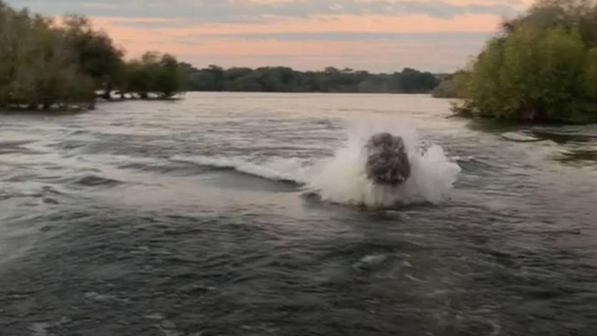 Hipopótamo cargando contra una lancha
