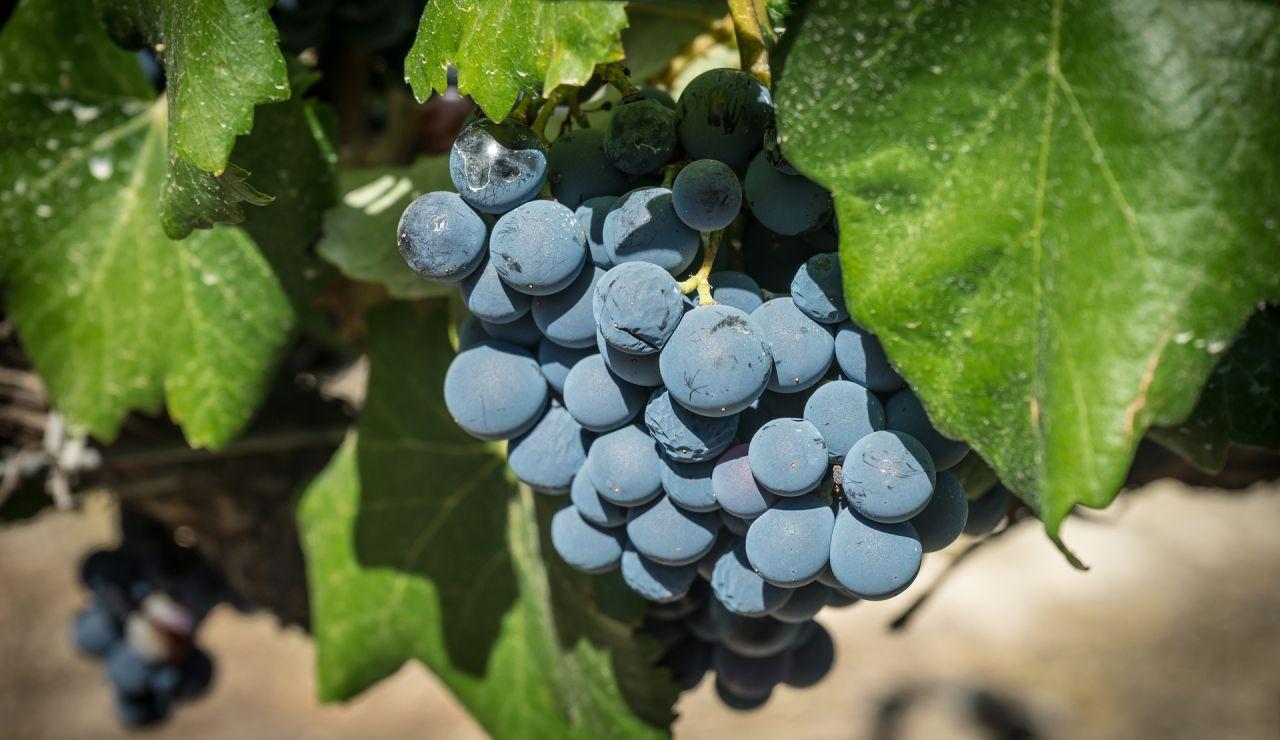 Día de la Rioja 2021: ¿por qué es festivo hoy 9 de junio?