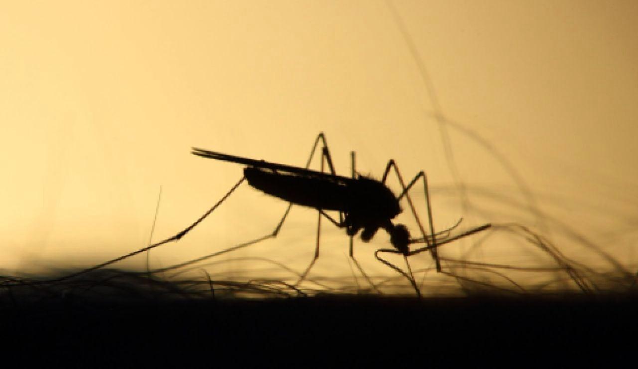 Detectan el primer caso del virus del Nilo este año en Dos Hermanas, Sevilla