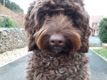 Un perro bombero salva a una mujer que se iba a suicidar en Inglaterra