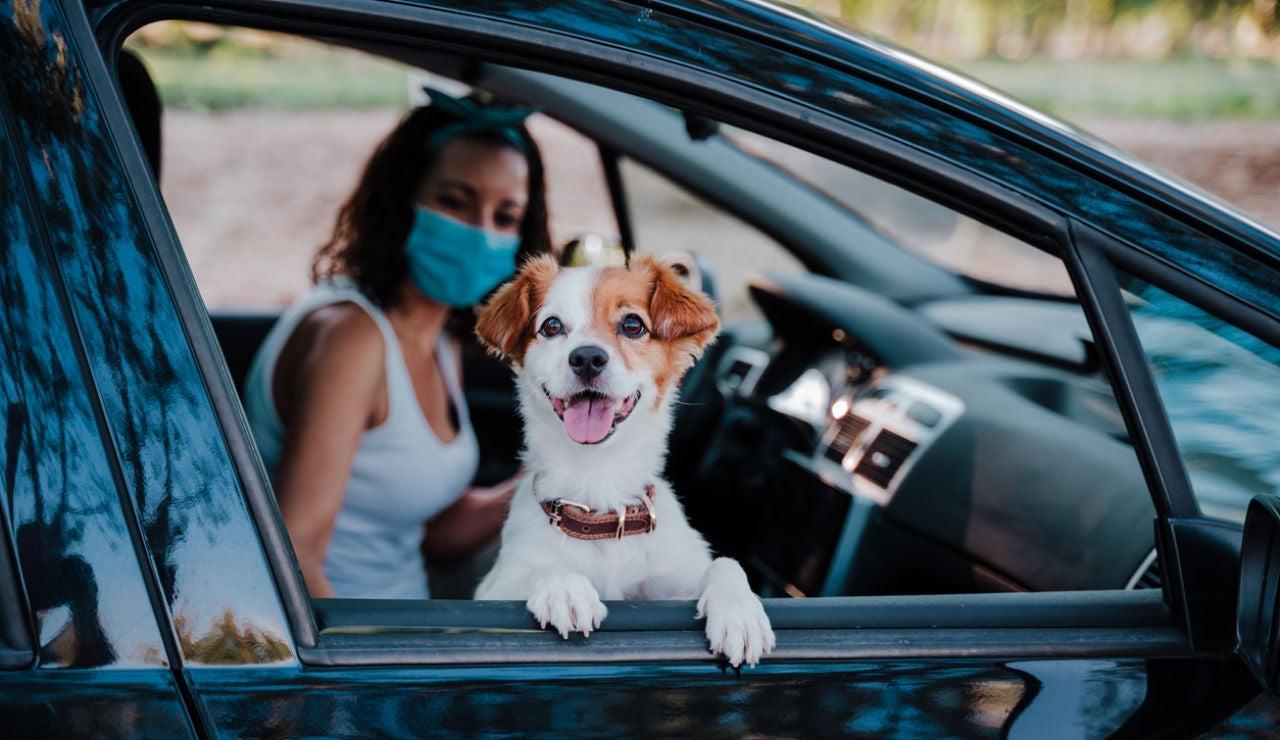 Viajes y mascotas: todo lo que tienes que saber