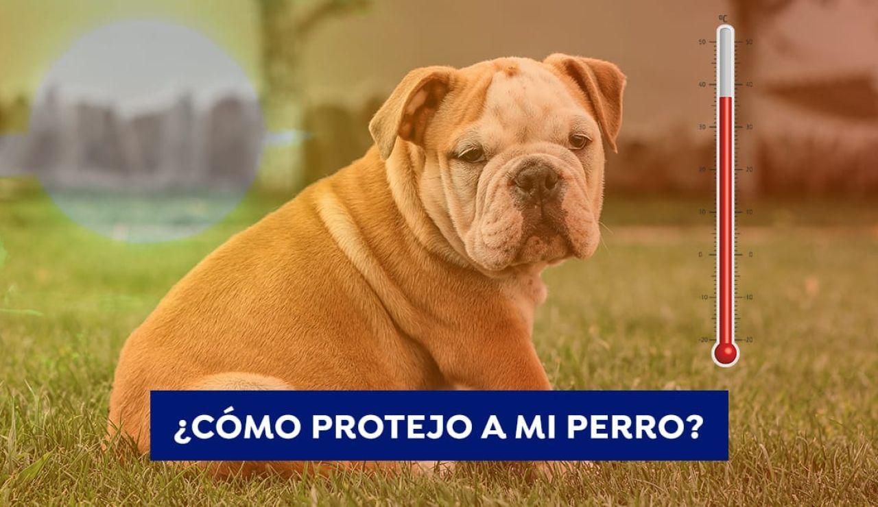 Hablan los expertos: cómo cuidar a los perros en días de mucho calor