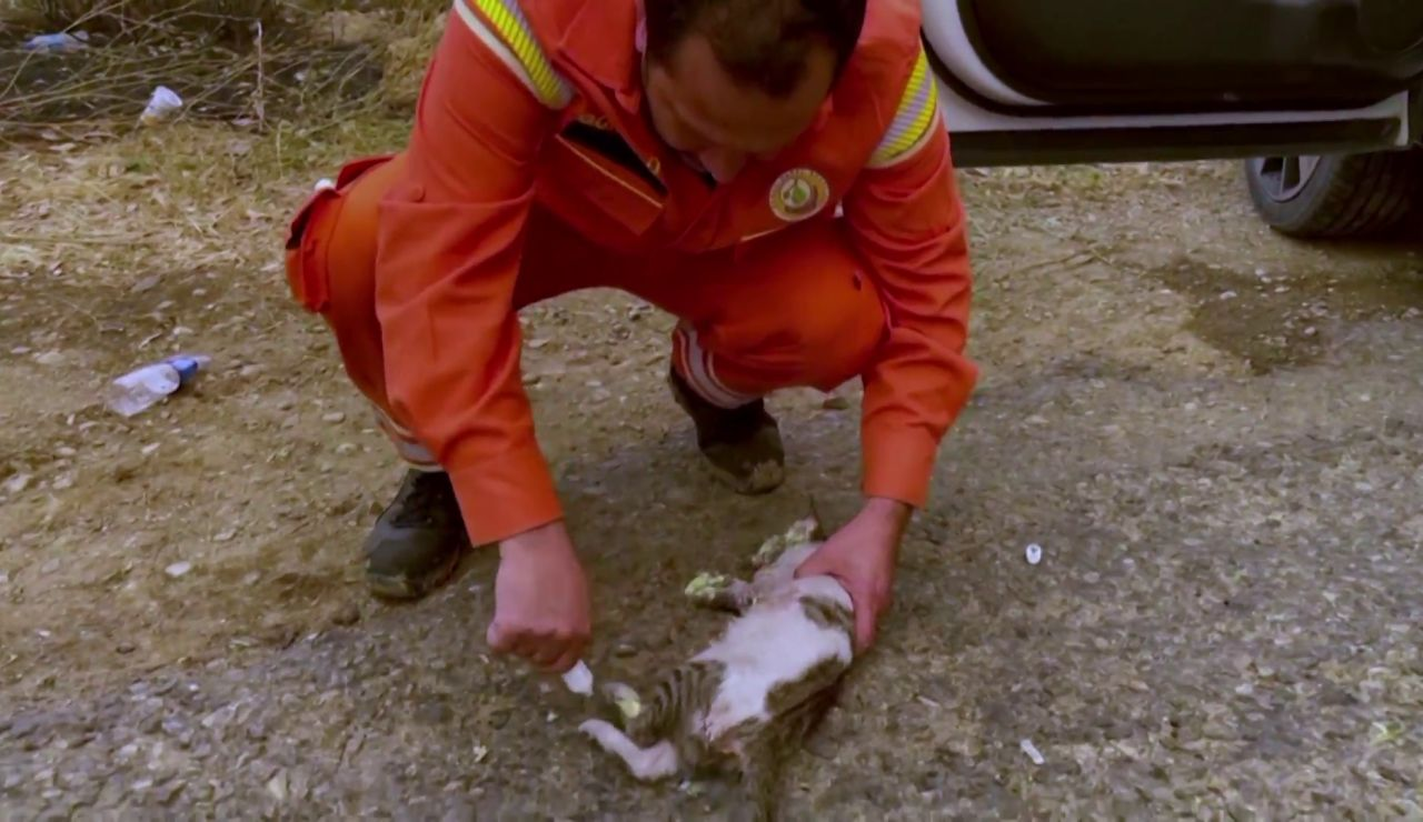 Rescatan decenas de mascotas atrapadas en los incendios del sur Turquía