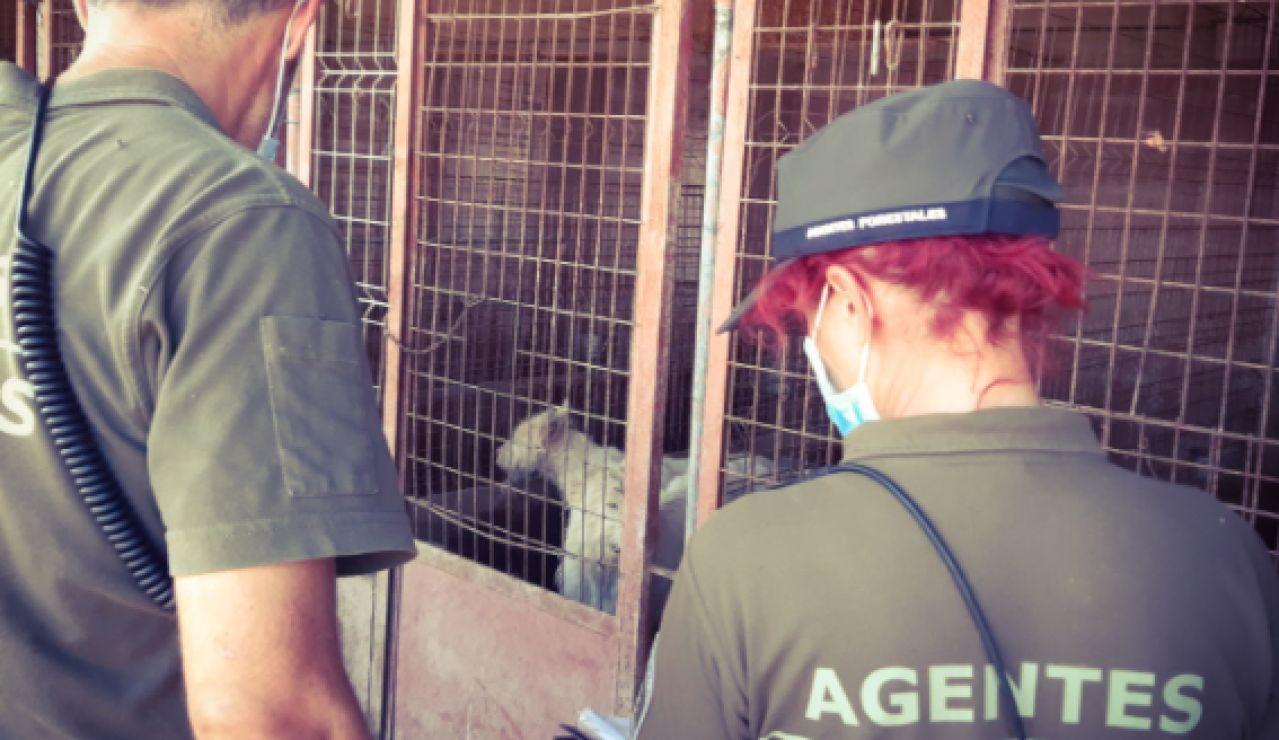 Encuentran 15 perros muertos y 87 desnutridos en una finca de Madrid