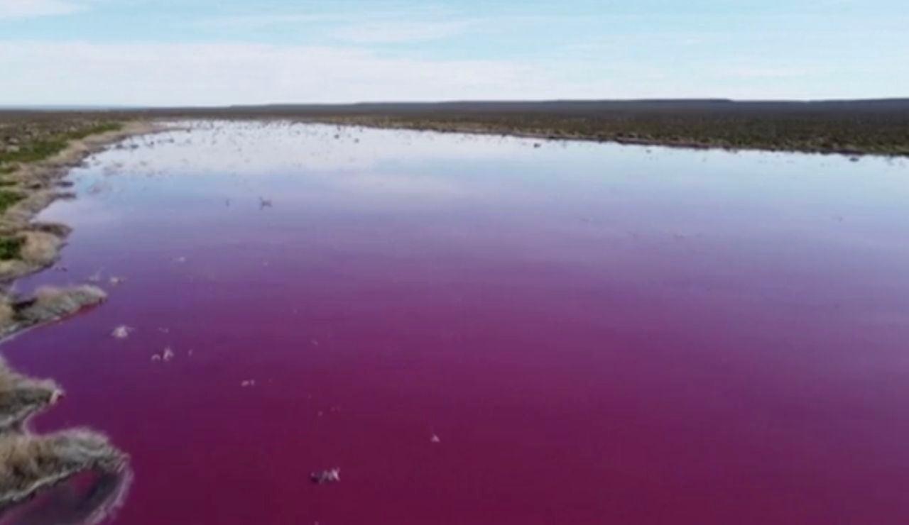 Dos lagunas quedan cubiertas de rosa en la Patagonia Argentina.