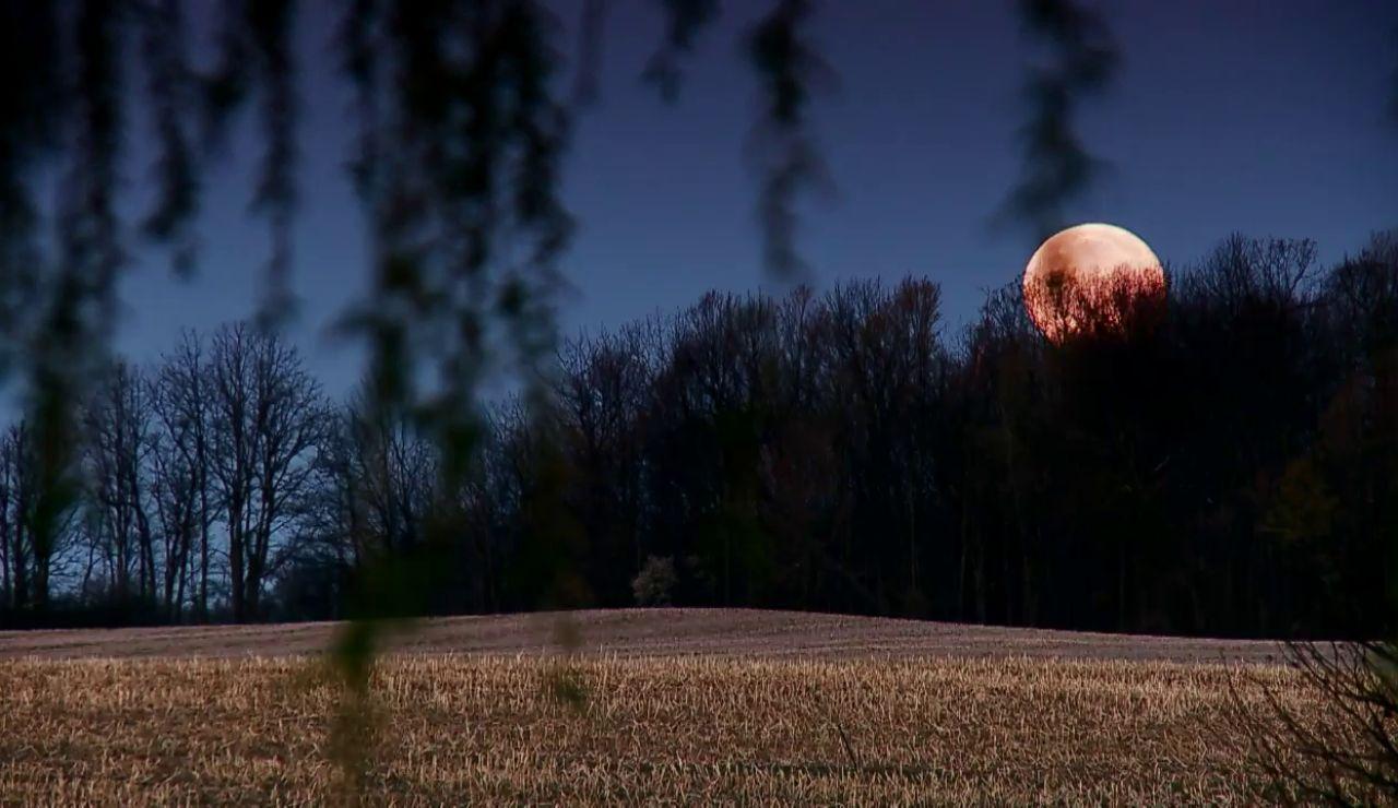 La luna llena enloquece a los animales. Te lo mostramos.