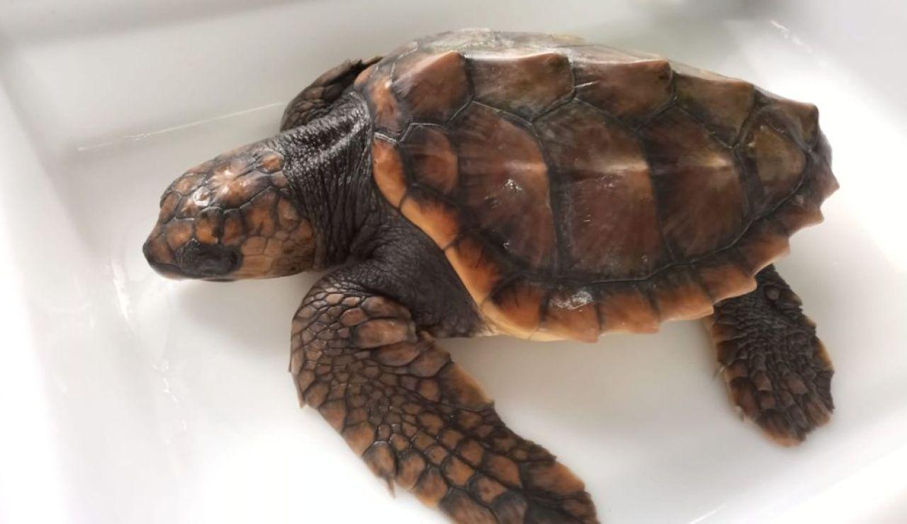 La tortuga Vilán