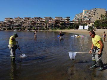 El Gobierno propone crear un 'cinturón verde' para salvar el Mar Menor