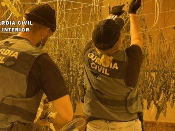 Once detenidos y 1.727 plantas de marihuana intervenidas en Almería
