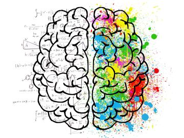Cerebro [archivo]