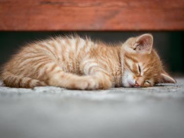 Encuentran a su gato perdido a 180 kilómetros de distancia y sus dueños creen que se subió a un tren
