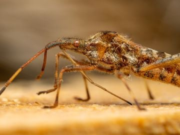 """Invasión de mosquitos en varias localidades de Castellón: """""""