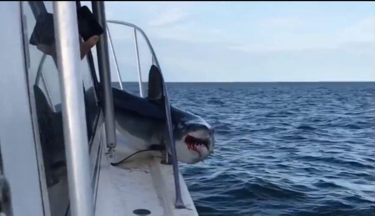 Un enorme tiburón salta a un barco de pesca y se queda atascado