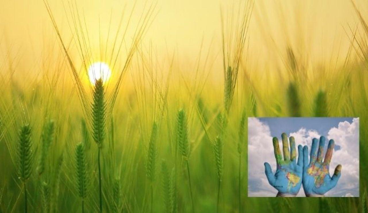 Día Mundial de la Alimentación 2021: ¿Por qué se celebra el 16 de octubre?