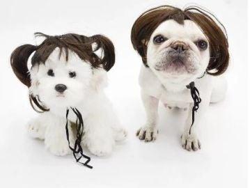 Pelucas para perros, la nueva tendencia para dotar de personalidad a tu mascota