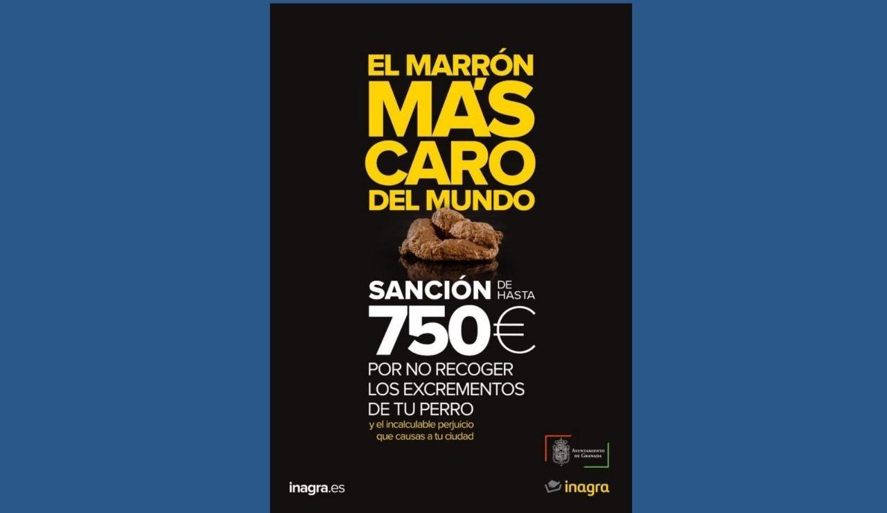 'El marrón más caro del mundo', así recuerda el Ayuntamiento de Granada que no recoger la caca de tu perro te puede costar 750 euros