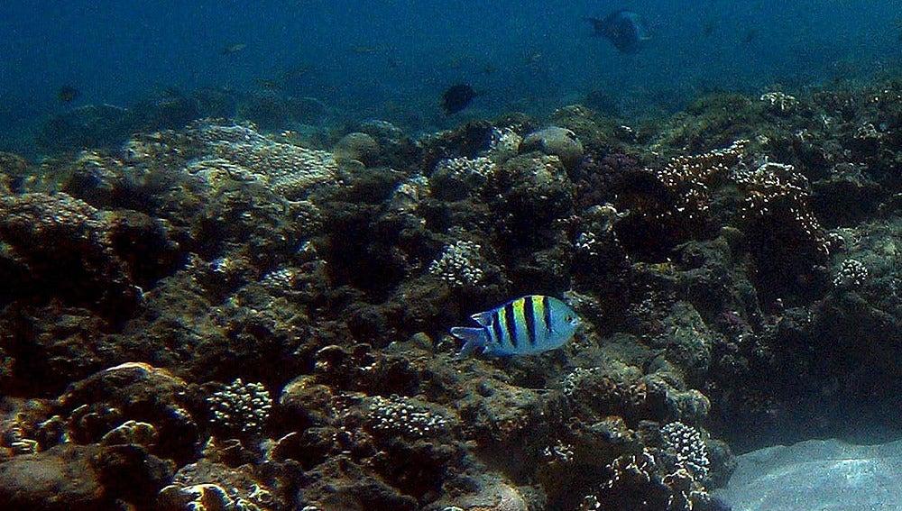 El arrecife Cabo Pulmo, en peligro