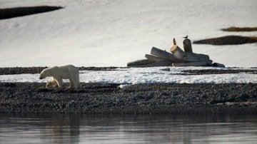 Oso en el Ártico